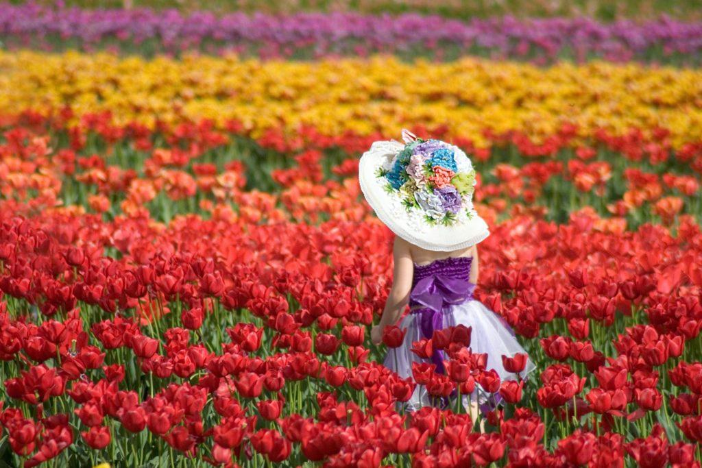 Куда поехать в апреле? Туры в Амстердам. Голландские тюльпаны