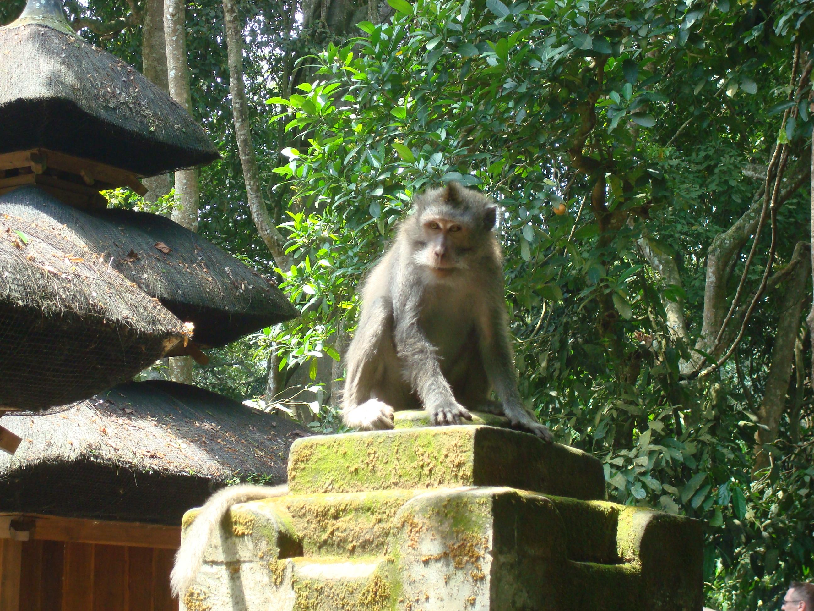Бали Индонезия. Туры на майские праздники