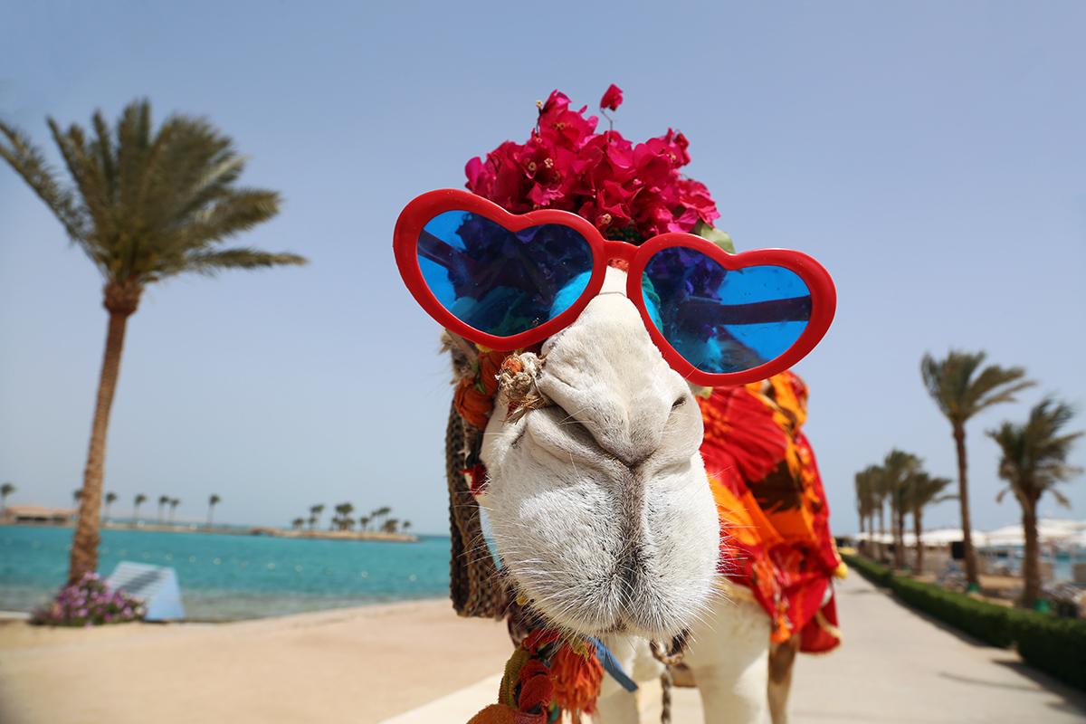 Правила въезда и туры в Египет